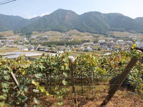 grape01.jpg